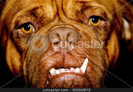 Ugly dog face stock photo, Face of a ugly dog with long teeth by Lars Christensen