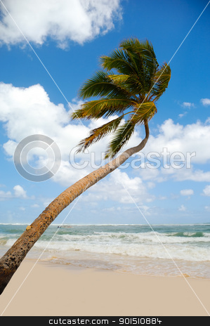 Palm on exotic beach stock photo, Palm hanging over exotic caribbean beach with the coast in the background. by Lars Christensen