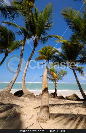 Palms stock photo, A groupe of palms are hanging over exotic caribbean beach with the coast in the background. by Lars Christensen