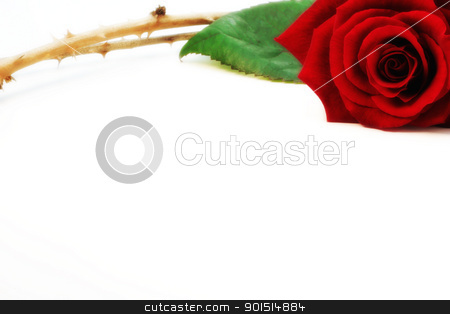 Rose and thorn stock photo, Red isolated rose and thorns on white background. by Primus