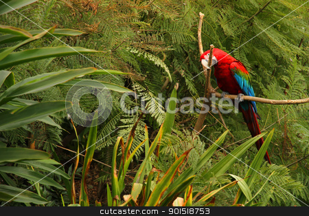 Parrot in the Forest stock photo, A Parrot in the tropical Forest. by Michael Osterrieder