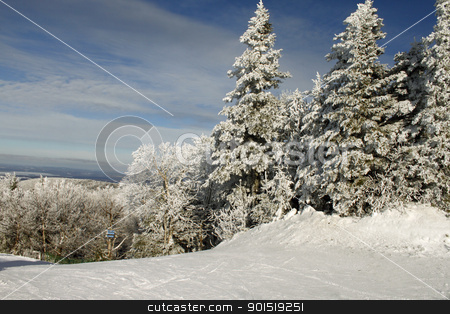 Snowy tree tops 8 stock photo, Snow ladden trees frosted after a winter storm by Denis Brien