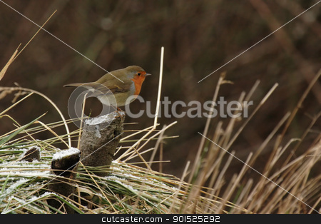 European Robin (Erithacus rubecula)  stock photo, European Robin (Erithacus rubecula) sitting on a snowy tree stump in winter by DirkR