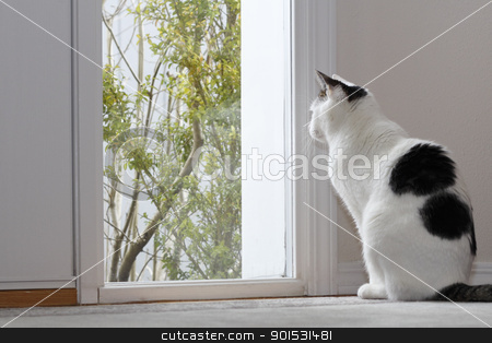Cat Looking Out a Window stock photo, Kitty Cat looking out the window by the front door of a home while sitting on the floor in the foyer during the day. by Lee Serenethos