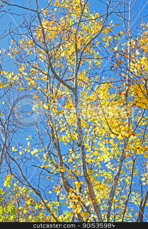 autumn forest  against blue sky stock photo, autumn forest  against blue sky in Iwate,Japan by yoshiyayo