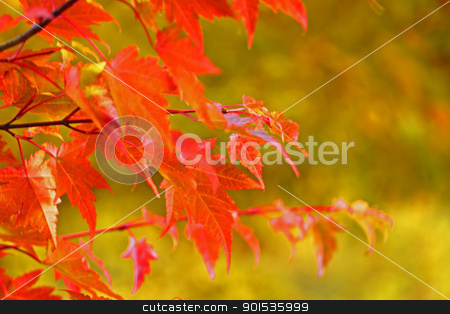 autumn forest  against blue sky stock photo, autumn forest  against blue sky by yoshiyayo