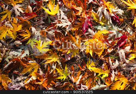 Leaf pattern stock photo, Leaf pattern at autumn by Kornel Kovacs