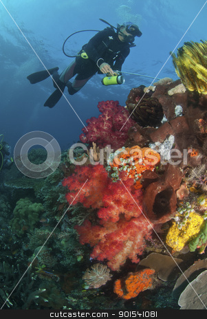Crinoid stock photo, The view of a scuba diver and a colorful reef scene, Raja Ampat, Indonesia by Fiona Ayerst Underwater Photography