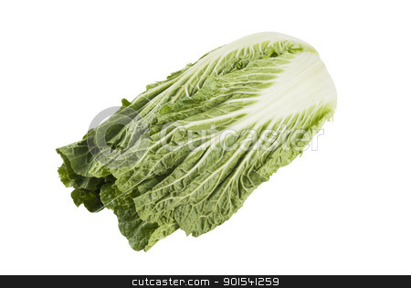 Chinese Cabbage stock photo, One fresh Chinese cabbage isolated on white background by Tiramisu Studio