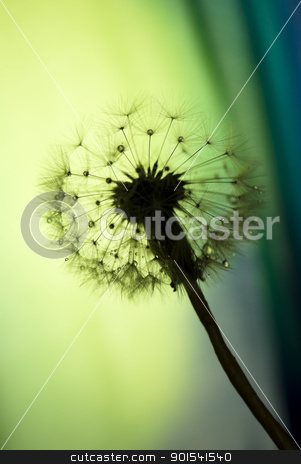 Dandelion stock photo, Autumn dandelion by Tiramisu Studio
