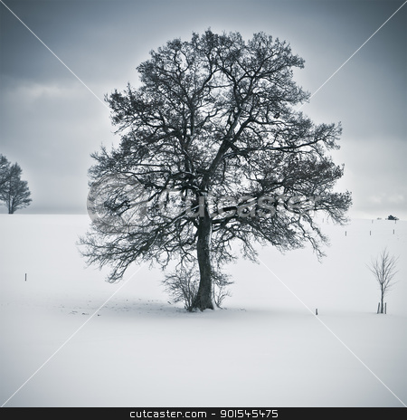 snowy tree stock photo, An image of a nice tree in a winter scenery by Markus Gann