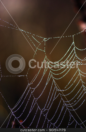 Spider web stock photo, spider web by Sarka