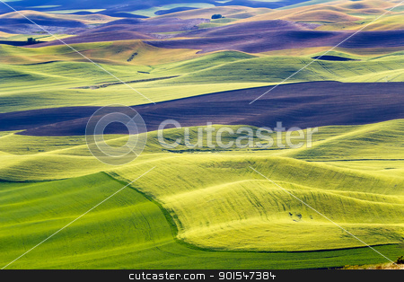 Green Wheat Fields Black Fallow Land Patterns and Farms from Ste stock photo, Yellow Green Wheat Fields Black Dirt Fallow Land from Steptoe Butte at Palouse Washington State Pacific Northwest.  Steptoe Butte is the highest spot in the Palouse, Washington. by William Perry