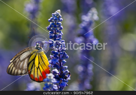 Butterfly stock photo, Butterfly by pixs4u