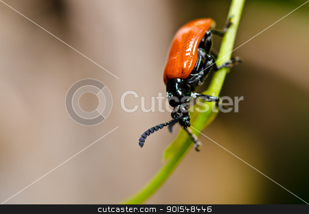 red bug in green nature stock photo, red bug in green nature or in the garden by sweetcrisis