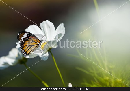 Monarch butterfly resting on a white flower  stock photo, Monarch butterfly resting on a white flower  by pixs4u