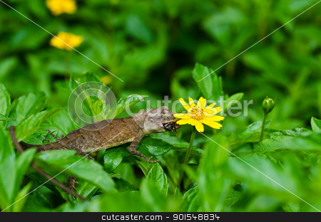 Lizard in green nature stock photo, Lizard in green nature or in park or in the garden by sweetcrisis