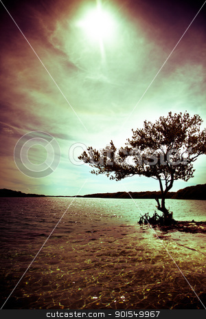 Silhouette of a tree with ocean view stock photo, Black silhouette of a tree and on the ocean by Stephane Thomas Durocher