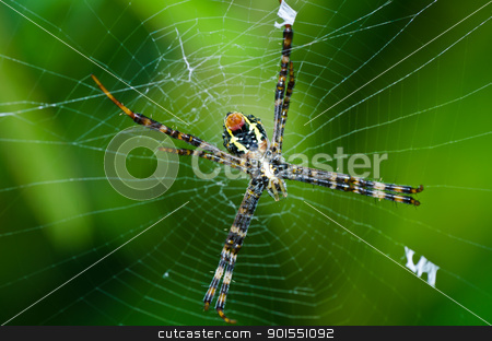 spider in nature stock photo, spider in nature or in the garden by sweetcrisis