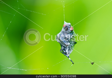 fly in green nature stock photo, fly in green nature or in the city by sweetcrisis