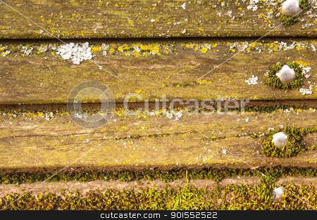 Moss covered Wood Beams with Metal Bolts stock photo, Several moss and fungus covered wood beams that are connected by four silver bolts. The moss contains a variety of green hues and the fungus is a white/grey color.  by Stuart Wainstock