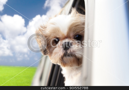 dog enjoying a ride in the car stock photo, dog enjoying a ride in the car by tomwang