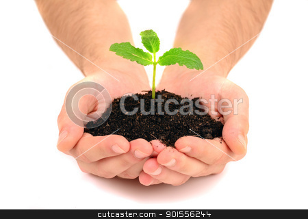 Fresh shoot, from a small pile of earth in human hands stock photo, Fresh shoot, from a small pile of earth in human hands by bakelyt