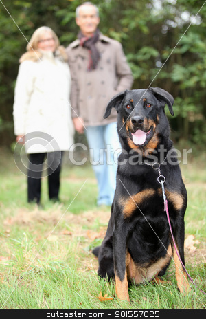 Couple walking dog stock photo, Couple walking dog by photography33