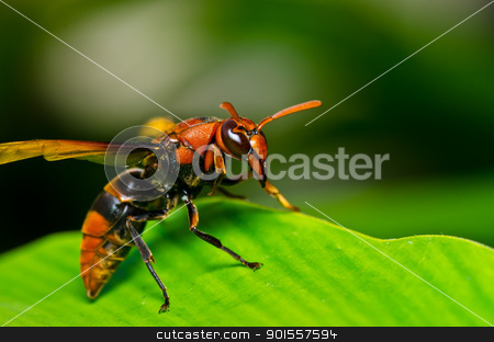 wasp in green nature or in garden stock photo, wasp in green nature or in garden. It's danger. by sweetcrisis