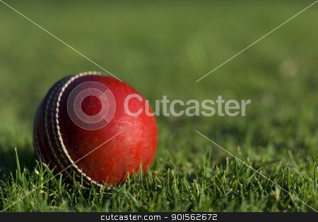 Red Cricket Ball On Grass stock photo, A red cricket ball on green grass background by Stephen Gibson