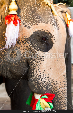 elephant face close up  stock photo, elephant face close up in lopburi of Thailand by Lavoview