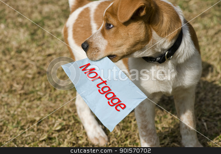 Mortgage stock photo, Pay your mortgage or let your dog have fun. by WScott