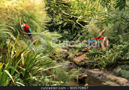 Parrots in the Forest stock photo, A Parrot in the tropical Forest. by Michael Osterrieder