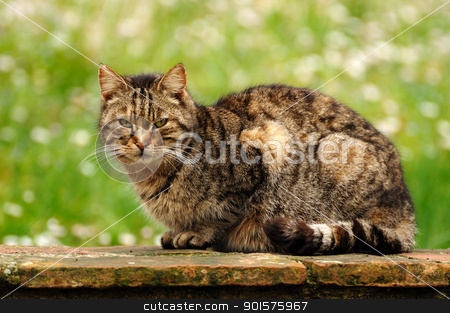 Cat portrait stock photo, A nice portrait of a beautiful cat by Maurizio Martini