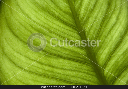 Green leaf stock photo, Green leaf background by Dutourdumonde