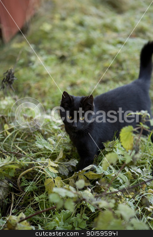 Black cat stock photo, Black cat in the grass by Anne-Louise Quarfoth