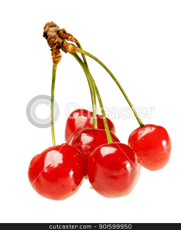 Five cherry on sprig stock photo, Five ripe fresh cherry on sprig by Iryna Rasko