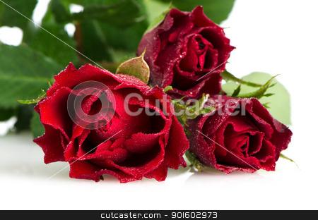 Bunch of velvet red roses stock photo, Bunch of velvet red roses  isolated on white background. by Homydesign