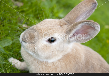 Rabbit Close Up With Defocused Background stock photo, Portrait of a Cute rabbit On Green Meadow. Easter Concept by KonArt