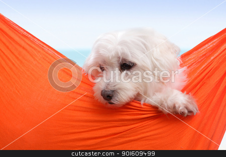 Cute puppy dog stock photo, Adorable white puppy dog sitting in an orange sling hammock by the seaside.  by Leah-Anne Thompson