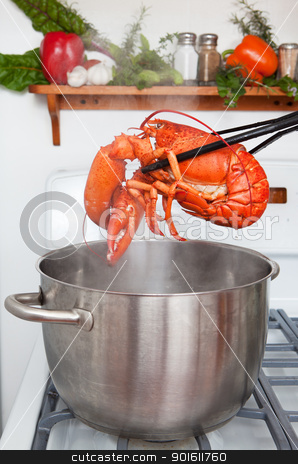Boiled lobster stock photo, A cooked lobster being lifted from a pot in the kitchen. by Steve Mcsweeny