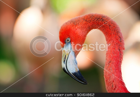 Flamingo stock photo, A detailed portrait of a pink flamingo.  by Steve Mcsweeny