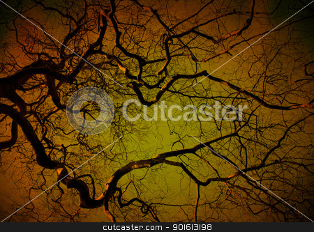 Spooky tree at night stock photo, Spooky tree at night, orange and green glow by steve ball