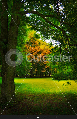 glade in forest stock photo, glade in autumn forest by Petr Malyshev