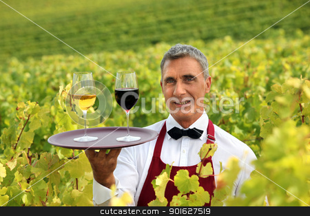 Waiter stood in vineyard with tray of wine glasses stock photo, Waiter stood in vineyard with tray of wine glasses by photography33
