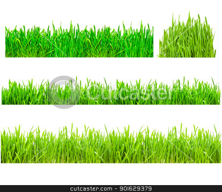 Green Grass stock photo, Two types of green grass on a white isolated background by Alexey Popov