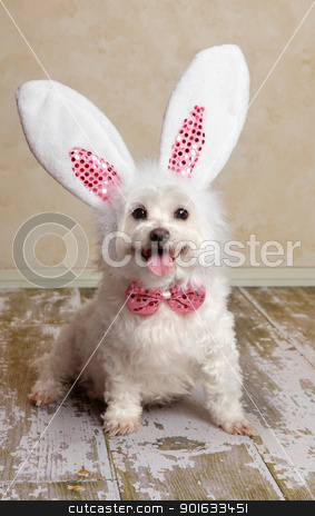 Puppy dog wearing bunny rabbit ears costume stock photo, Cute little dog wearing bunny ears and matching sequin bow tie in a rustic setting. Suitable for easter or fancy dress halloween.   by Leah-Anne Thompson