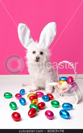 Pretty dog with bunny ears and easter eggs stock photo, An adorable dog wearing bunny ears and surrounded by lots of colourful easter eggs. by Leah-Anne Thompson