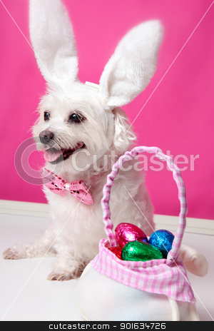 Happy dog at easter  stock photo, Happy dog wearing bunny ears sits beside a bag ful of easter egg chocolates. by Leah-Anne Thompson