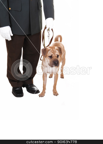 Man with dog. stock photo, A watch man with his dog standing in the studio for white background, a sharpei dog on the leash, the man with white cloves.  by Horst Petzold
